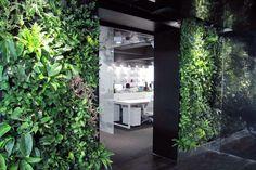 green wall - kitchen void??