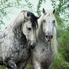 A pair of Grays.  By Katarzyna Okrzesik Photography