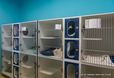 Our fully monitored and secure cat boarding area. #pets #veterinarian #kennels