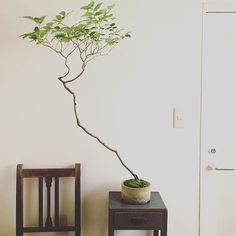 Bonsai Art, Bonsai Garden, Japanese Indoor Plants, Vase With Branches, Japan Garden, Bonsai Styles, Indoor Trees, Minimalist Garden, Room With Plants