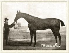 Waxy, Tapit's 21'st generation sire. An Epsom Derby winner, he was known for his beauty and a bond to his pet rabbit. By Pot-8-Os and out of leading race mare Maria by Herod.