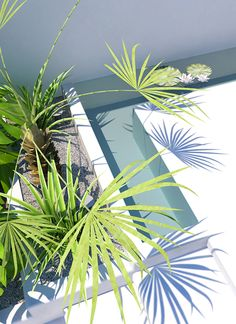 Tropical backyard   3d visualisation by Eleni Psyllaki