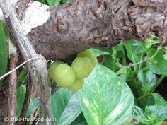 Grosella Fruit, Food, Exotic, Eten, Meals, Diet