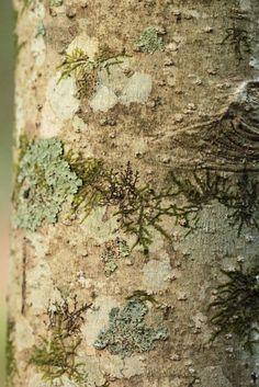 moss, lichens
