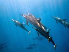 Swam with gorgeous Spinner dolphins in Kealakekua Bay, Kona, Hawaii. Dream come true!