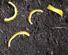 Use Lemon Peel to Deter Cats from Your Garden