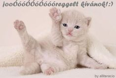 Cute kittens - they are really cute Cute Kittens, Fluffy Kittens, Kittens And Puppies, Baby Kittens, Cats And Kittens, Funny Cats, Funny Animals, Cute Animals, Beautiful Cats