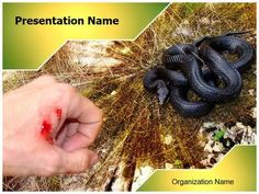 Snake Bite Powerpoint Template is one of the best PowerPoint templates by EditableTemplates.com. #EditableTemplates #PowerPoint #Wildlife #Snake Bite #Wild #Poisonous #Swelling #Venomous #Dying #Anticoagulant #Snake #Bit #Hazards #Dangerous #Antivenom #Poison #Antivenin #Snakebitevictim