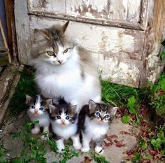 Momma cat and her kittens