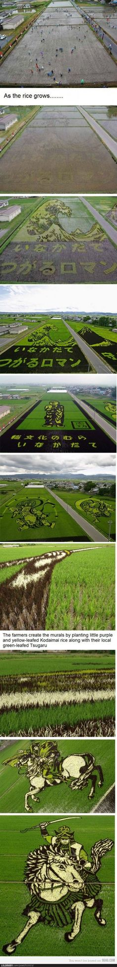 Japanese Rice Field Art - not funny, just really COOL!