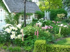 The Perennial Garden in Summer