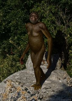 """Ardipithecus ramidus is currently the oldest known bipedal hominin (early humans and their relatives). Csotonyi says: """"I put a lot of myself..."""