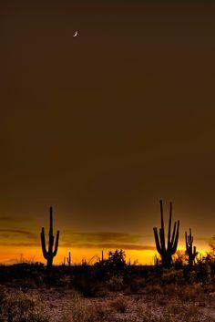 Desert Glow, Arizona - Bob Bowman