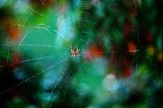 Best nature pictures of 2012 - 27 - PelFind