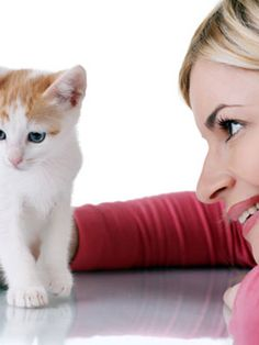 Essential Pet Supplies for New Cat Owners #cats #pets
