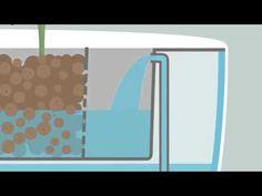 What is Aquaponics? - YouTube