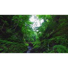 """【ema.vezel】さんのInstagramをピンしています。 《#インスパイア1 動画切り抜き。何とも奥行きのある滝です。周りの地形と木々がそうしているのでしょう。 奥に見えるのは流れ着いた大木の根っこの裏です。  Instagramに掲載するとかなり画質が落ちてしまいますが実際はこの画質で撮影が可能です。  Because an animation is being also taken out in YouTube, please see. """"Animation depot ema"""" right or wrong channel registration for a search word, please. #ヴェゼル#vezel#hrv#HONDA#DIY#SUV#ゴープロ#goplo#session#hero4#drone#ドローン#クアッドコプター#ラジコン#inspire1#インスパイア1#空撮#空から日本を見てみよう#鳥になる1つの方法#アニメ #コスプレ#猫#ねこ#cat#custom#レイアウト#アクアリウム#ADA#空撮ってる人と繋がりたい》"""