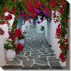 Bougainvillea Path Crop Weatherprint Art                                                                                                                                                     More