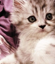 Cute Baby Cute as a Kitten ♥♥) share cute things at www.sharecute.com