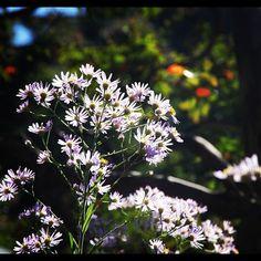 Pretty flowers.......