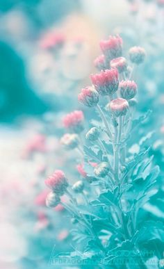 ✧・゚ soft pastel aesthetic ✧* Flowers Nature, Wild Flowers, Beautiful Flowers, Blooming Flowers, Foto Macro, Blue Aesthetic, Flower Wallpaper, Phone Backgrounds, Soft Colors