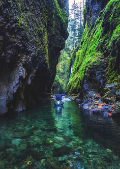 Travel USA Oregon Enchanting Places Hikes Nature The Outdoors Beautiful Places America the Beautiful Oregon Travel, Travel Usa, Oregon Hiking, Oregon Vacation, Oregon Coast Roadtrip, Backpacking Oregon, Hiking Usa, Oregon Camping, Travel Tips