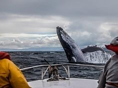 Whale watching trips. Plettenberg Bay Adventures | Thing to do in Plettenberg Bay - Dirty Boots