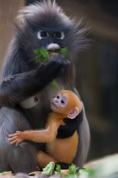 mom and baby #primates