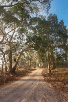 early morning light on rural roads through the gum trees : Austockphoto Winter In Australia, Australia Travel, South Australia, Melbourne Australia, Landscape Photos, Landscape Art, Landscape Photography, Australia Landscape, Australian Bush