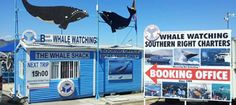 The Whale Shack - Southern Right Charters booking Office - Whale Watching Hermanus Whale Watching, Whales, Thing 1 Thing 2, Dolphins, Penguins, Shark, Trips, Wildlife, Southern