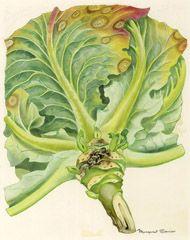 various plant disease illustrations