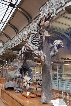 Museum of Natural History,57 Rue Cuvier, Paris V