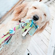 Come see how easy it is to make a fun new dog toy out of new or old jersey material for your fur baby! They'll love it!