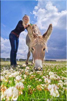 Wandeltocht met een ezel van het Ezelhuis in Wissenkerke. Op je gemak over het Zeeuwse Noord-Beveland.