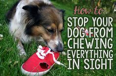 How To Stop Your Dog From Chewing Everything in Sight | eBay