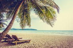caribbean coconut holiday landscape sea Free Photo