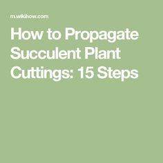How to Propagate Succulent Plant Cuttings: 15 Steps