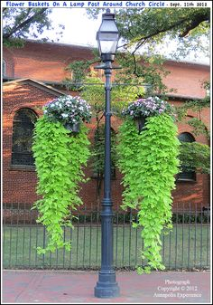 Flower pots hanging from a lamp post along Church Circle on the northwest side of historic St. Anne's Church in Annapolis Maryland. Outdoor Landscaping, Front Yard Landscaping, Outdoor Gardens, Boxwood Garden, Garden Trees, Landscape Design, Garden Design, Outdoor Lamp Posts, Backyard Lighting