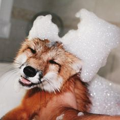 """Everyone loves bubble baths """