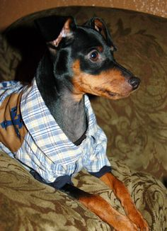 MIN PIN.....IF I WERE A HUMAN MY NAME WOULD BE SHERLOCK ...I AM QUITE CERTAIN IN FACT