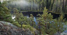 Old pines and Stora Trehörninen, Stenkällerundan. Ice Sheet, Wild Forest, Going On A Trip, Bouldering, Wilderness, Sweden, National Parks, To Go, Travel