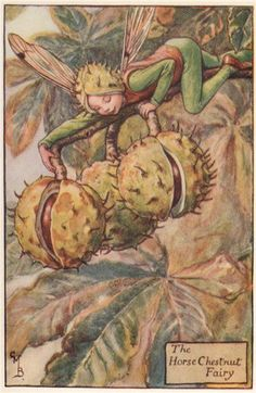 FLOWER FAIRIES/BOTANICALS: The Horse Chestnut Fairy; This is an original vintage Cicely Mary Barker Flower fairies colour print. It is not a modern reproduction, c1935; approximate size 11.0 x 7.0cm, 4.5 x 2.75 inches