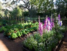 Beautiful small edible garden, lettuce, foxgloves living in perfect harmony repinned by www.huttonandhutton.co.uk