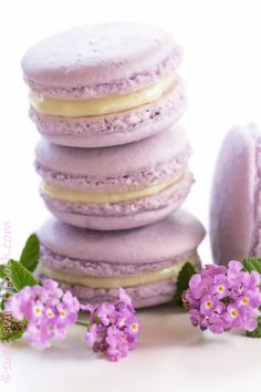 lavender macarons filled with lavender ganache