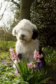 spring child.. by dewollewei, via Flickr