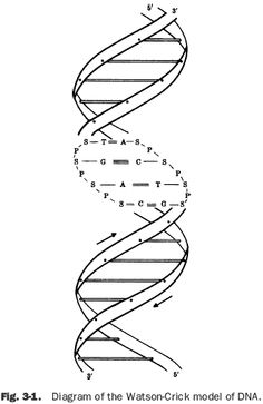 Nucleic acids are nucleotides, which are chains of smaller