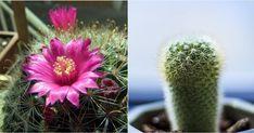Cactus, un mundo por descubrir. ¡Te contamos los diferentes tipos!