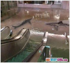 Two of my biggest fears in one! I can hardly look at the picture, my belly just did flip flops!