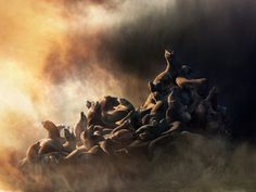 """""""The sea lion image developed over several years. It started with one sea lion in 2005 and then became a group. While kayaking in California a few years ago I photographed sea lions on a rock in the sunset. When I returned to New York I superimposed them onto a black background and they looked like ghosts in a void, which I liked. I went back the following winter and was able to capture the sea lions in the same light. Once I started to piece them together the shapes made an interesting…"""