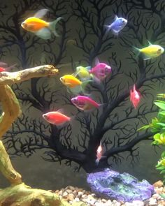 thepetsupplyguy fishsupplies supplies fishtank goldfish aquarium glofish gallon buying animal guide tetra guppy pets fish How Many GloFish per Gallon Buying GuideYou can find Goldfish and more on our website Beautiful Photos Of Nature, Beautiful Nature Wallpaper, Beautiful Gif, Beautiful Birds, Animals Beautiful, Beautiful Fantasy Art, Fish Wallpaper, Live Wallpaper Iphone, Colorful Wallpaper